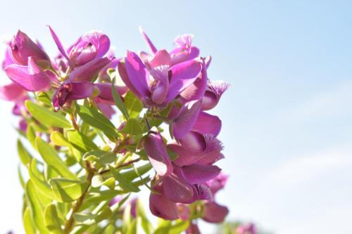 olivia-blumen